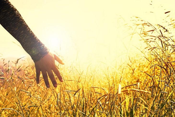 דברים שחשוב לזכור כשדברים נמצאים מחוץ לשליטתכם: יד של אישה עוברת בשדה חיטה