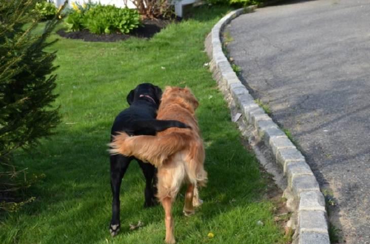 תמונות של חיות שמעלות חיוך: זוג כלבים מחבקים זה את זה בעזרת הזנב