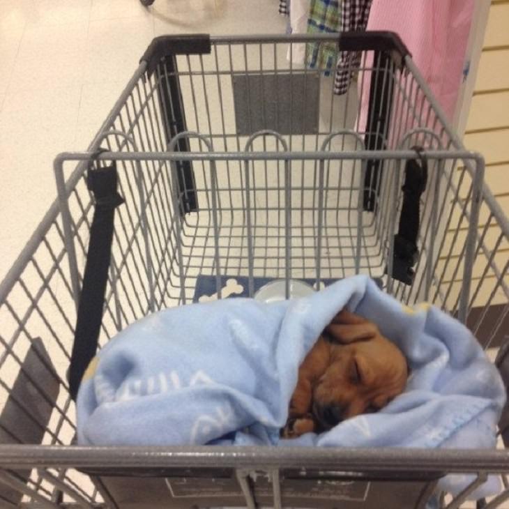 תמונות של חיות שמעלות חיוך: גור כלבים בתוך עגלת סופר מרקט