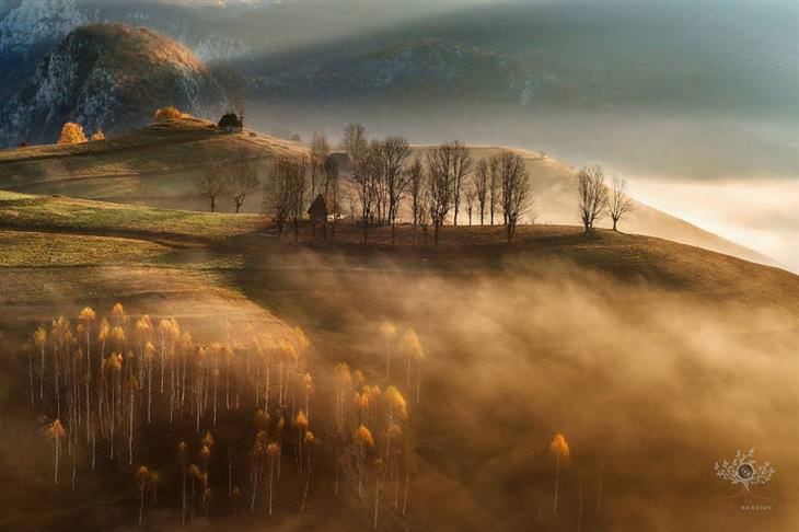 תמונות מדהימות של טרנסילבניה: עמק שעובר בו ערפל בין עצים עירומים מעלים