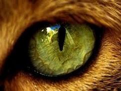 מבחן אישיות עיניים