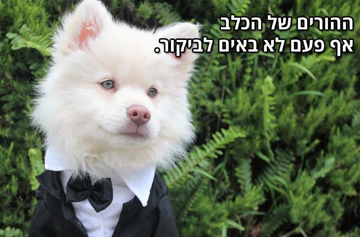 למה הכלב הוא החבר הטוב ביותר של הגבר: ההורים של הכלב אף פעם לא באים לביקור.