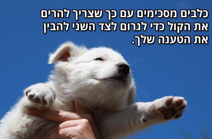 למה הכלב הוא החבר הטוב ביותר של הגבר: כלבים מסכימים עם כך שצריך להרים את הקול כדי לגרום לצד השני להבין את הטענה שלך
