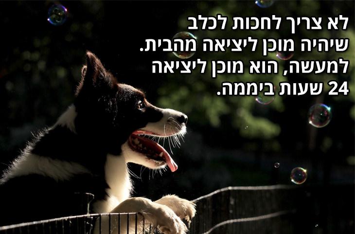 למה הכלב הוא החבר הטוב ביותר של הגבר: לא צריך לחכות לכלב שיהיה מוכן ליציאה מהבית. למעשה, הוא מוכן ליציאה 24 שעות ביממה.