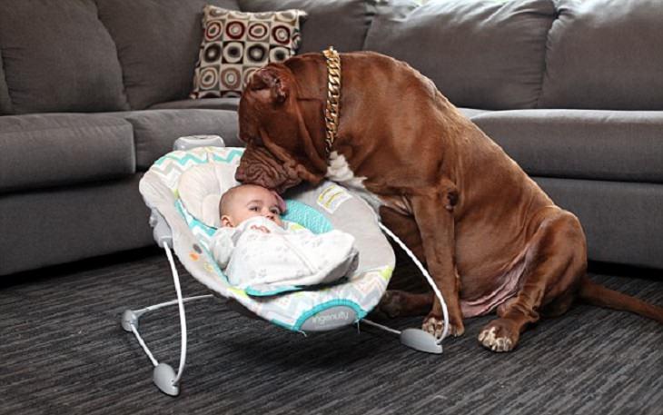 חיות שעובדות: כלב שהוא בייביסיטר