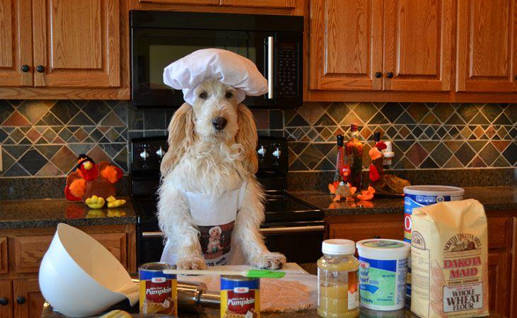 חיות שעובדות: כלב טבח