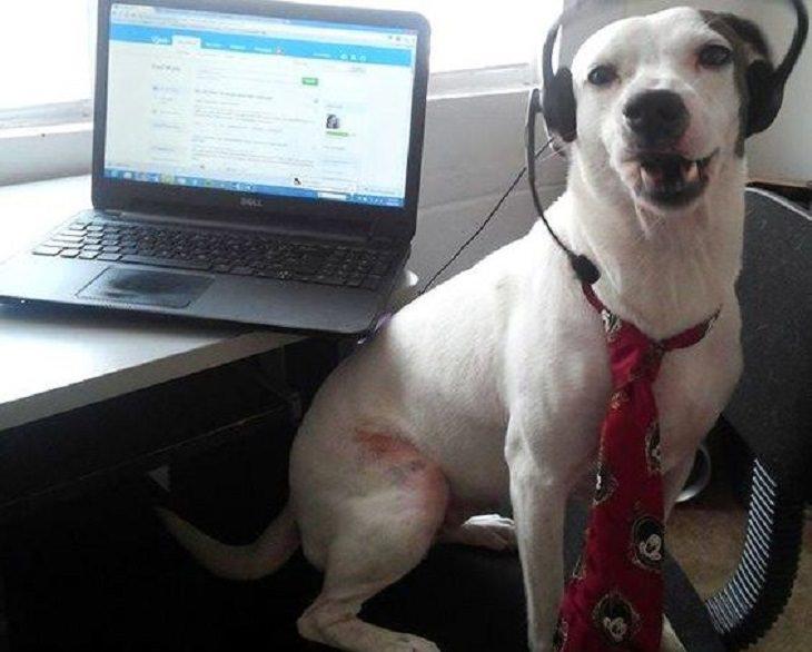 חיות שעובדות: כלב נציג שירות
