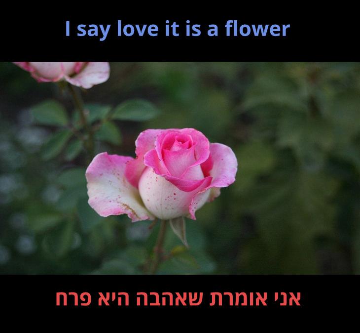 """מצגת לשיר """"הוורד"""" של בט מידלר: אני אומרת שאהבה היא פרח"""