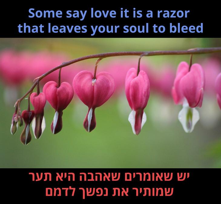 """מצגת לשיר """"הוורד"""" של בט מידלר: יש שאומרים שאהבה היא תער שמותיר את נפשך לדמם"""