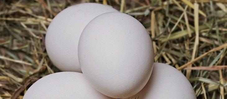 מאכלים עשירים בביוטין: ביצים