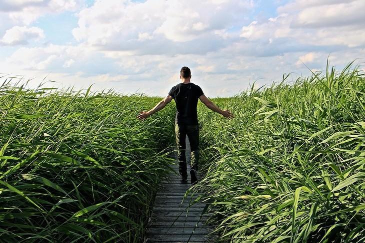 עצות חכמות מסבא: גבר הולך בין שיחים גבוהים