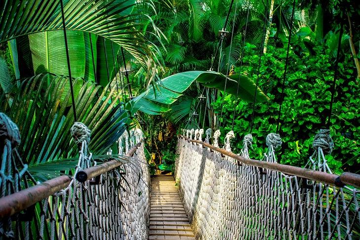 חדשות חיוביות מ-2017: יער האמזונאס