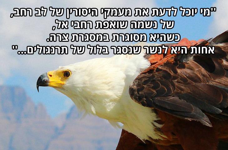ציטוטים של הרב קוק: ''מי יוכל לדעת את מעמקי היסורין של לב רחב, של נשמה שואפת רחבי אל, כשהיא מסוגרת במסגרת צרה. אחות היא לנשר שנסגר בלול של תרנגולים...''