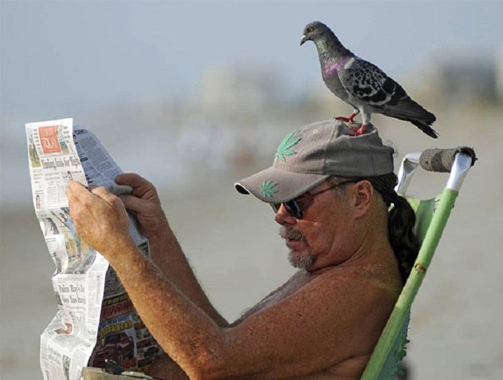 תמונות מצחיקות בתזמון מושלם: יונה יושבת על ראשו של גבר על חוף הים