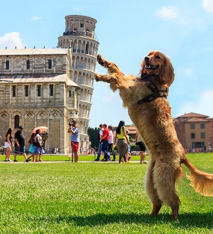 תמונות מצחיקות בתזמון מושלם: כלב עומד על שתי רגליו סמוך למגדל פיזה