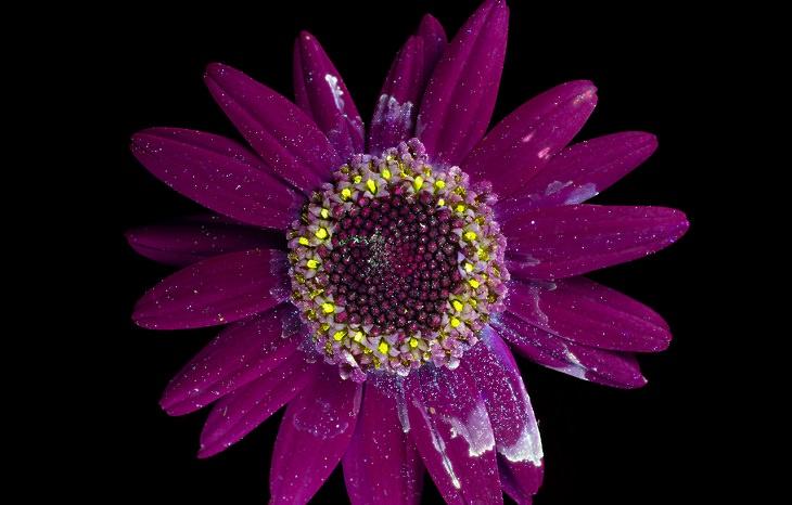 פרח מואר בצבע סגול וצהוב