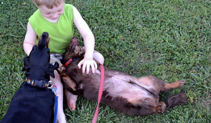 ילד קטן מלטף כלבים