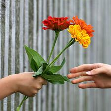 יד מושיטה פרחים ליד אחרת מעבר לגדר