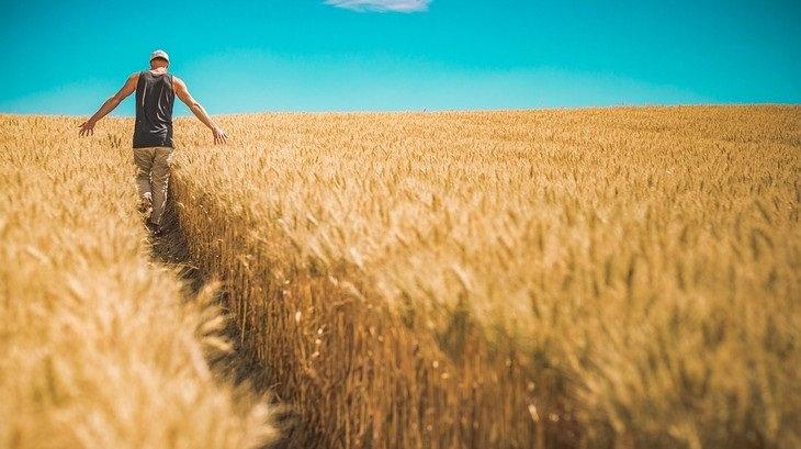 אדם הולך בשדה חיטה