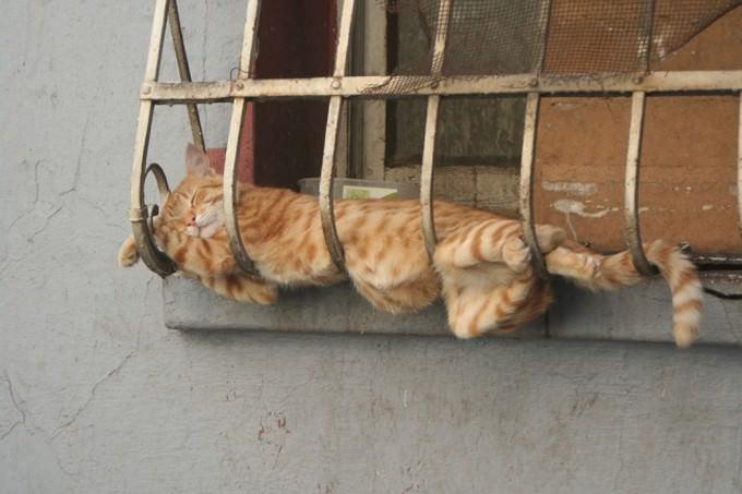 חתול ישן על סורגים של חלון