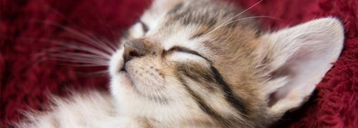 חתול ישן על הגב