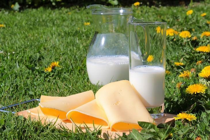 קנקן וכוס חלב מונחים על דשא לצד פרוסות גבינה דקות