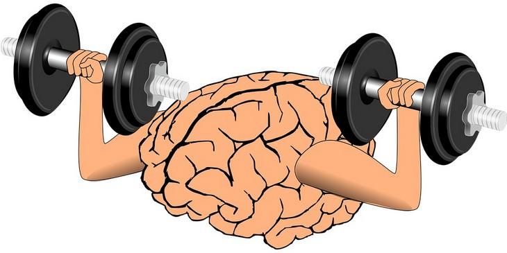 איור של מוח מרים משקולות