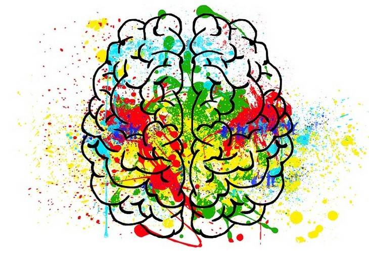 איור של מוח עם צבעים עליו