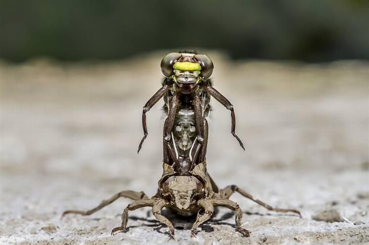 חרקים מזדווגים