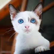 חתלתול
