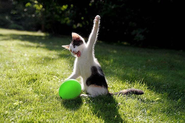חתולים מצחיקים וחמודים