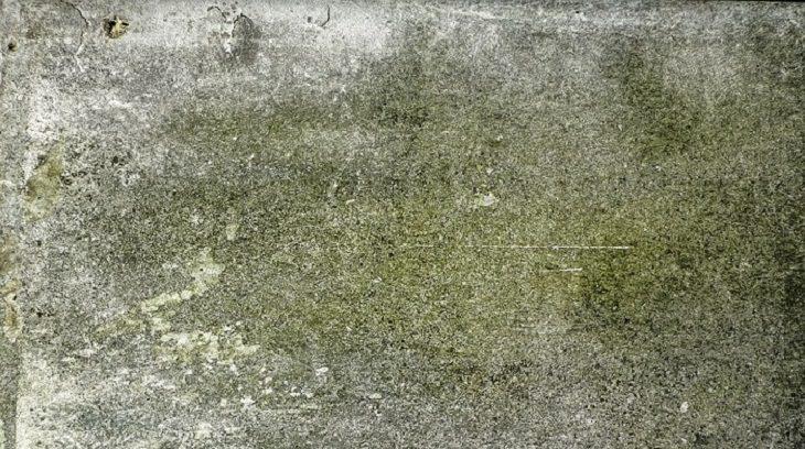 טחב על קיר