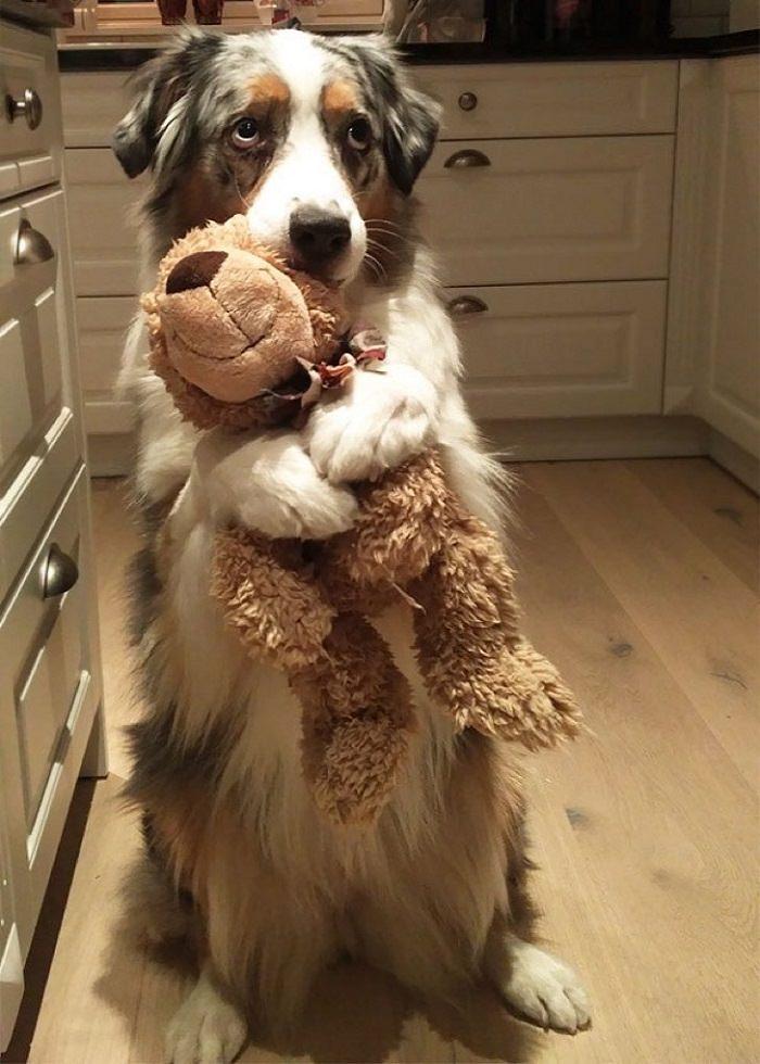 חיות חמודות עם בובות