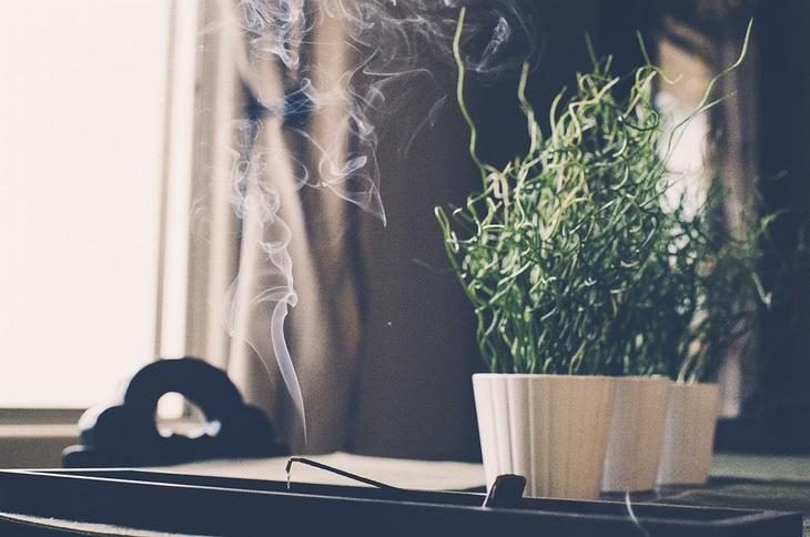 קטורת דולקת על רקע עציץ ירוק בסמוך לחלון בבית