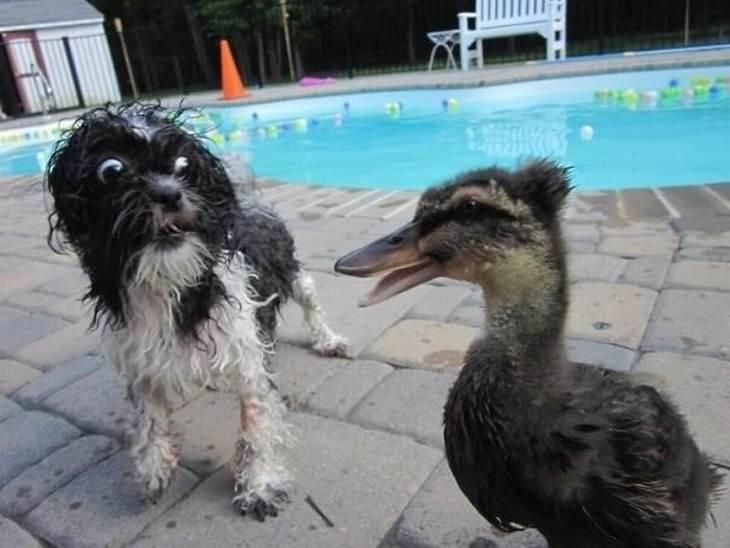 כלבים פחדנים ומשעשעים
