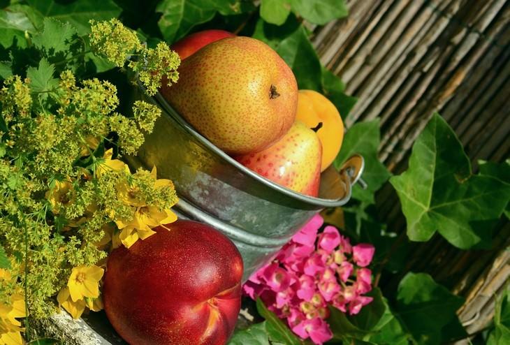 פירות בקערה