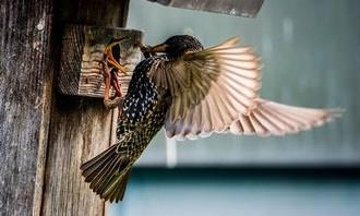 ציפור שמאכילה את גוזליה