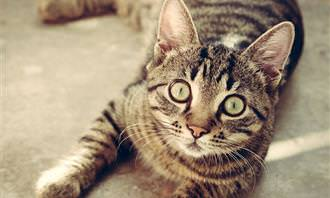 חתול מסתכל למצלמה