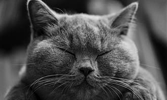 חתול עם עיניים עצומות