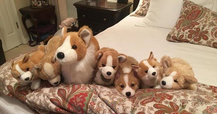 כלב שוכב על מיטה בתוך שורות בובות כלבים