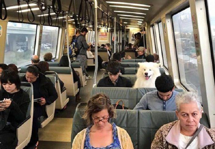 כלב יושב במושב בתוך אוטובוס מלא אנשים