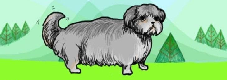 כלב מכשכש בזנבו קלות