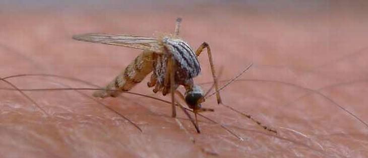 צילום מקרוב של יתוש על עור