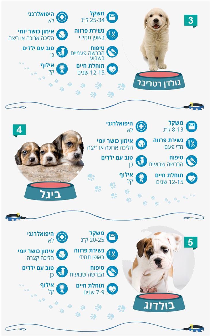 10 הכלבים הפופולאריים ביותר לגידול ואילוף