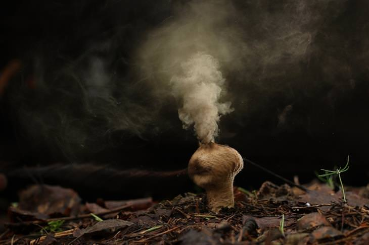 פטריה שצומחת מהאדמה ומשחררת מראשה עשן