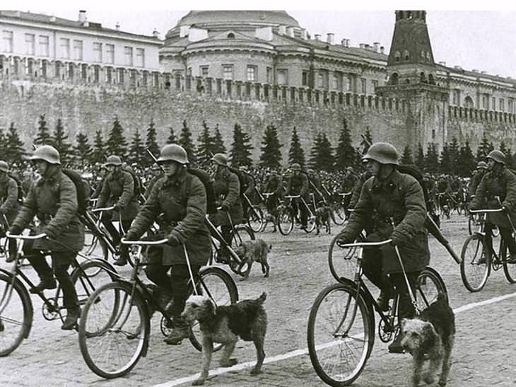חיילים סובייטיים בתהלוכה עם כלבים
