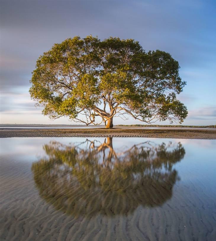 תמונות מרהיבות של אוסטרליה - עץ בודד על החוף במדינת קווינסלנד