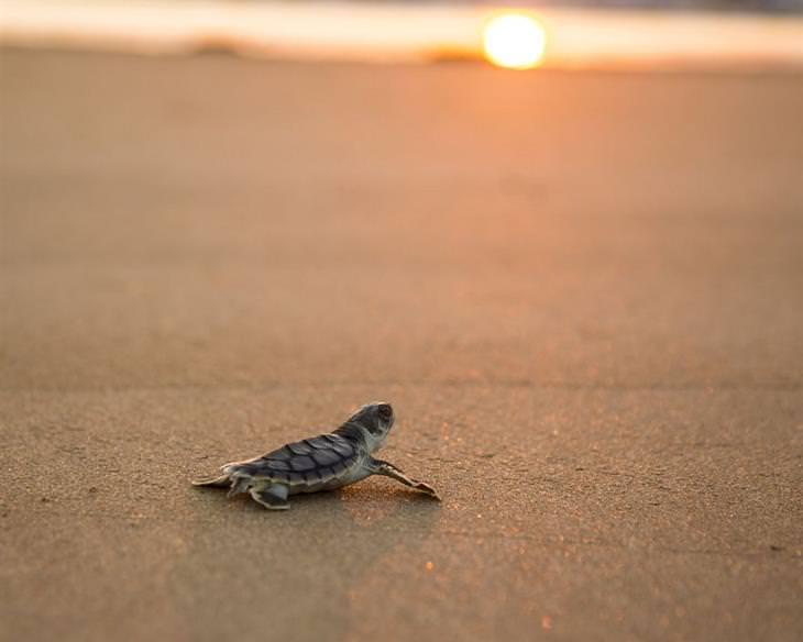 תמונות מרהיבות של אוסטרליה - צב ים על חופי הטריטוריה הצפונית