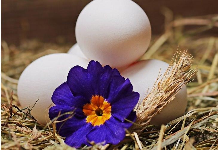 סודות הטיפוח של סבתא: ביצים מונחות על מצע קש