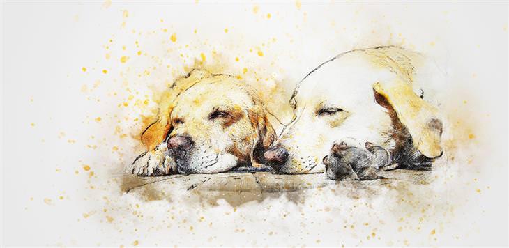 הסרת כתמי שתן: ציור של כלבים עם כתמים צהובים סביבם